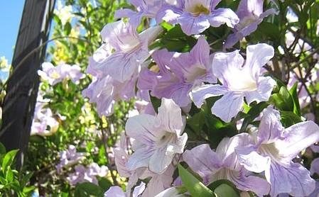 trubac - Udělejte si na zahradě okrasný oblouk, který přitáhne pozornost