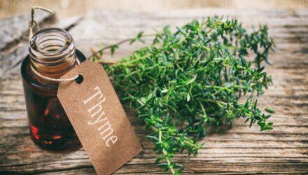 tymian bylinka