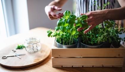 bylinka - Vypěstujte si domácí bylinky! Užitečné rady