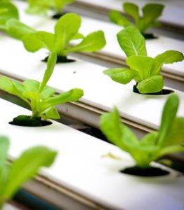 hydroponic 262x300 - Tipy pro pěstování – hydroponie