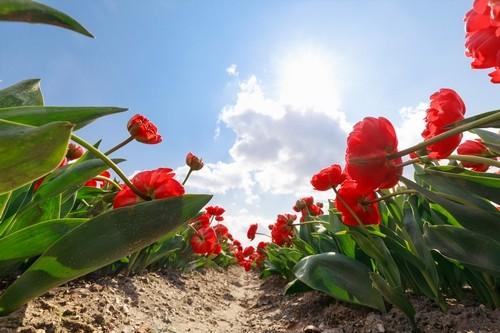 kvetina - Přilákat život do zahrady můžete mnoha způsoby