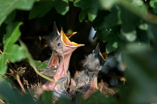 ptaci - Přilákat život do zahrady můžete mnoha způsoby