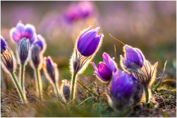 rostlina - Nejkrásnější jarní trvalky