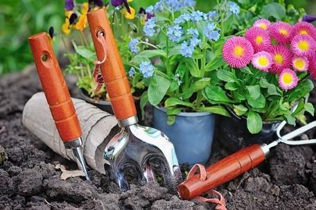 zahradnicke naradi - Rostliny na zahradu můžete nakoupit i v online zahradnictví