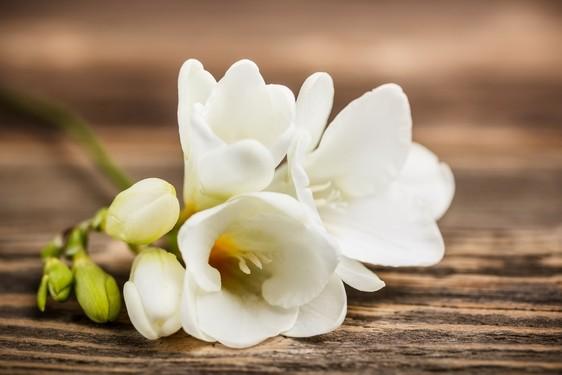 fresie - Květomluva stokrát jinak aneb jaké květiny vybrat pro paní učitelku