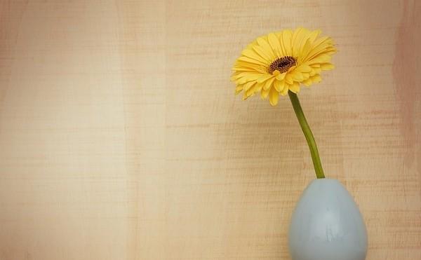 gerbera - Květomluva stokrát jinak aneb jaké květiny vybrat pro paní učitelku