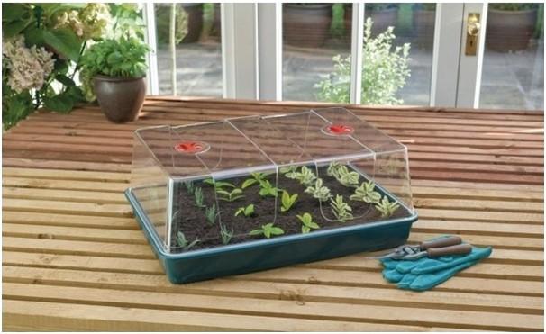 rostliny - 4 tipy pro úspěšné množení rostlin po celý rok