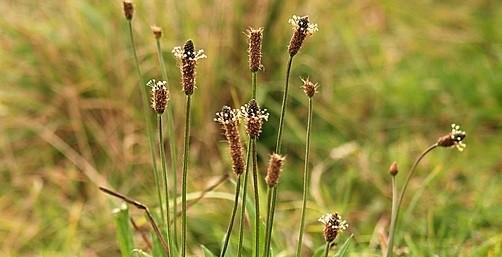 jitrocel - Nestihli jste v létě nasbírat bylinky? I na podzim je to ještě možné
