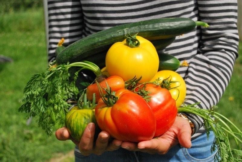 zelenina - 5 rad a tipů, jak využívat vodu k zalévání na vaší zahradě
