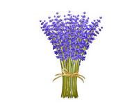 bylinky - Pěstování dle druhu