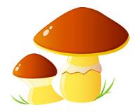 houby - Pěstování dle druhu