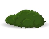 kere - Pěstování dle druhu