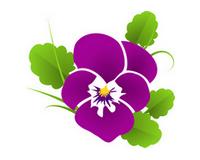 kvetiny - Pěstování dle druhu