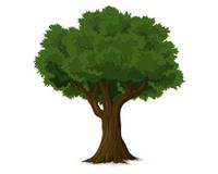 stromy - Pěstování dle druhu