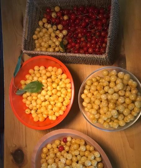 zelenina - Jakou zeleninu pěstuje se svými dětmi Pretty Woman neboli Julia Roberts