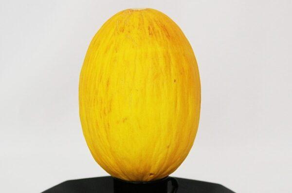 zluty meloun 600x396 - Pěstování vodních a žlutých melounů v našich podmínkách