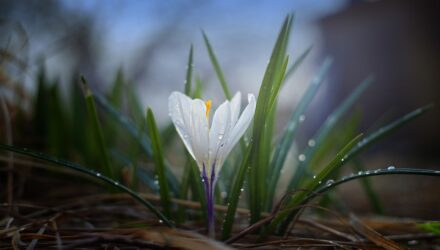 jarni kvetina