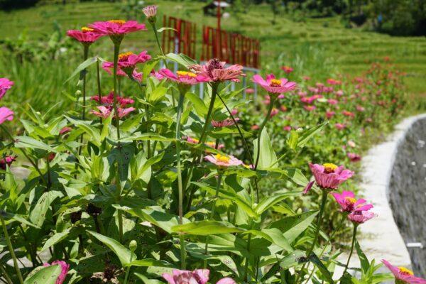 kvetina 1 600x400 - Jak podpořit trvalky v co nejlepším jarním startu? Nezapomeňte na ošetření a dobré hnojení