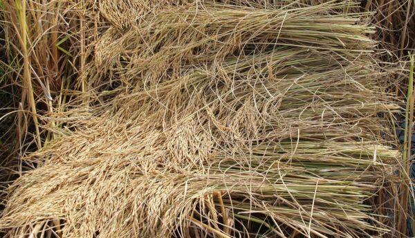 trava 600x344 - Stařinu z trvalkových záhonů odstraňte včas, mohla by bránit rozvoji rostlin