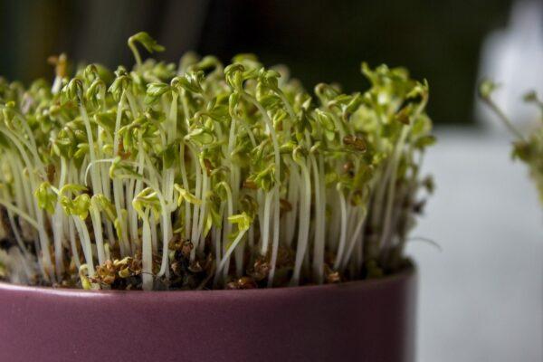 kress 600x400 - Zapomenuté druhy zeleniny, které pozitivně ovlivňují náš metabolismus