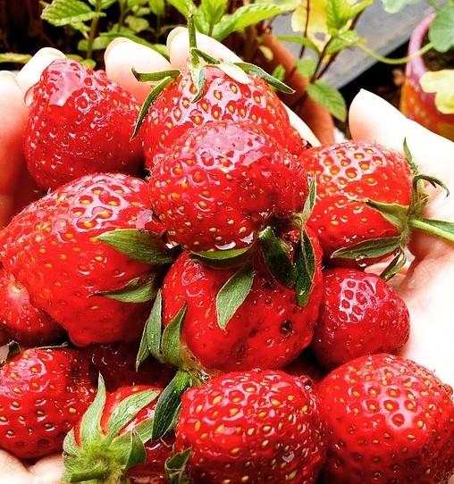 jahody - Zavřeniny jsou přívětivější sestřičky zavařenin. Tuhle metodu konzervace uplatníte od jara až do podzimu