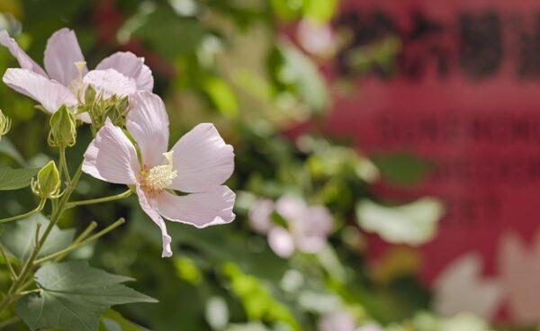 kvetiny 600x368 - Rybí moučka může zahradě významně pomoci, známe však i její levnější náhradu
