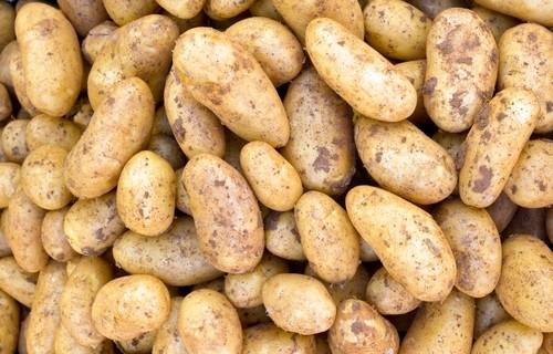 brambor - Brambory – jak je sklízet, skladovat a udržovat dlouho zdravé